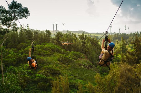 Zipline Tour On Oahu's North Shore