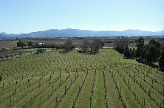 Picton Shore Excursion: Marlborough ...
