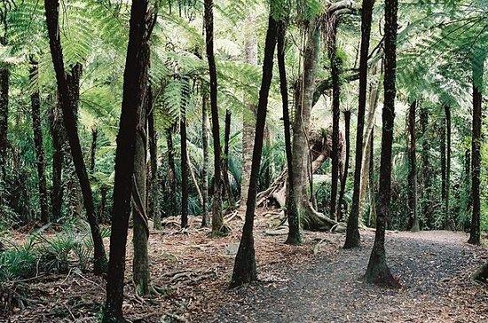 Excursão terrestre por Auckland...