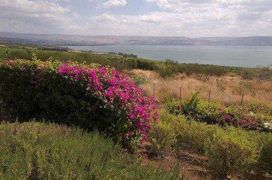 Haifa Shore Excursion: Nazareth and ...