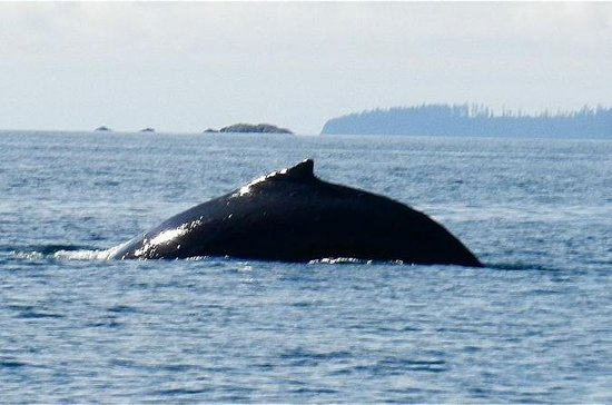 Sitka Shore Excursion: Whale-Watching ...