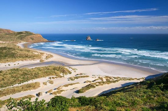 Dunedin, Otago Peninsula Small-Group...
