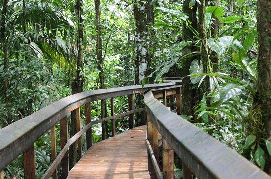 Circuit Rainforest Cinco Ceibas de 2...