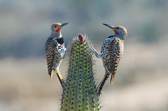 8-daagse Baja Bird Watching Adventure