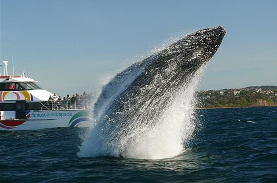 Sydney Whale-Watching Cruise fra...