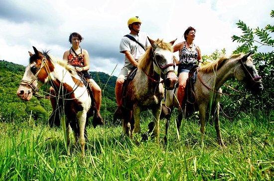 Jacó caballo Zipline y Rappel Combo...