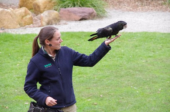 Healesville Sanctuary with Winery
