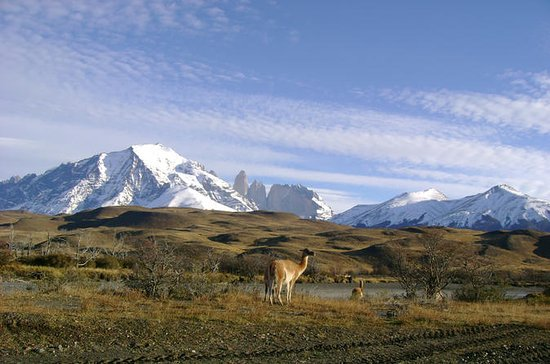 Torres del Paine Day Trip from Puerto...