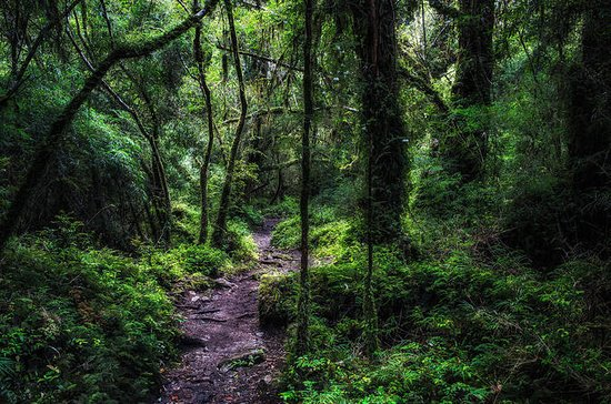 Alerce Andino National Park from...