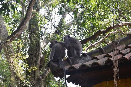 Monkey Forest and Ubud Art Tour in...