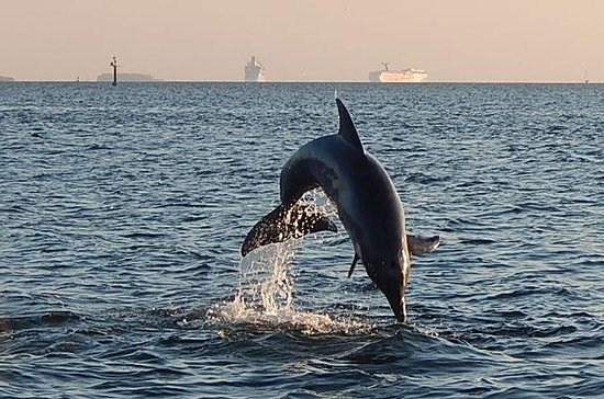 Tampa Bay 1.5-hour Dolphin Sightseeing Cruise with Guide