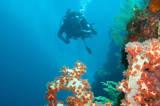 3-Day PADI Open Water Scuba Diving...