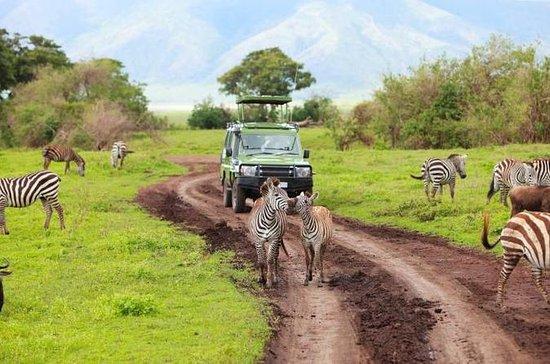 7 días Tanzania Backpackers Safaris