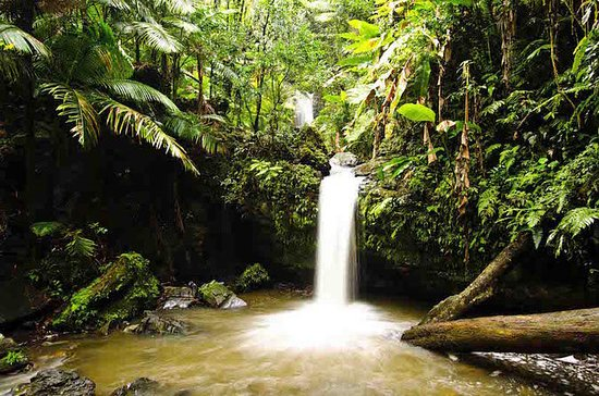 El Yunque Rainforest Hiking and Swimming Adventure Tour