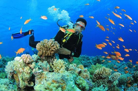 Beginners Scuba Diving Experience in...