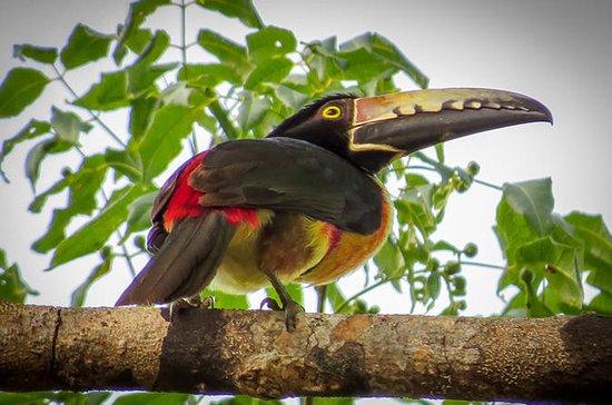 Tour privado: observación de aves...