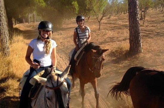 Excursion à cheval au départ de...