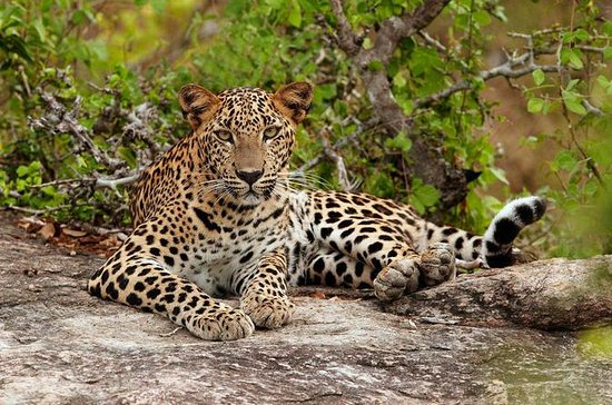 Overnight Private Leopard Safari with...