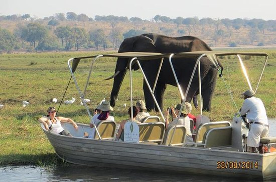 Excursion d'une journée à Chobe au...