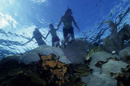 La Jolla kajakk og snorkeltur