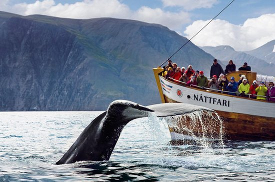 Original Whale Watching Tour on board...
