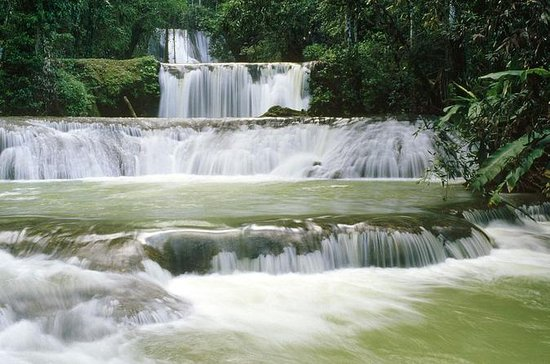 YS Falls plus Black River Safari de...