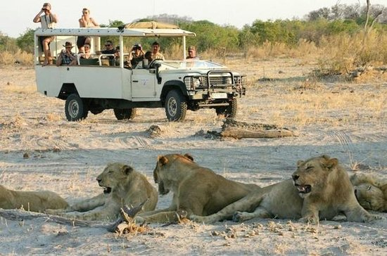Safari Camping Parc National de Chobe...