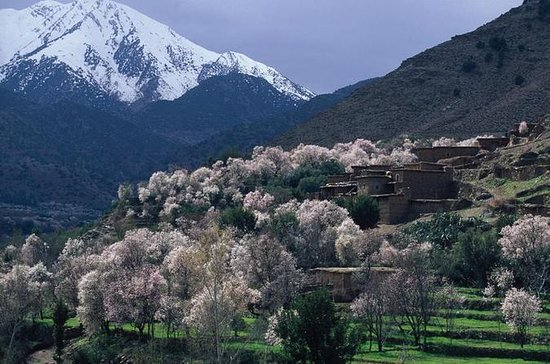 Private Day Trip: Atlas Mountains ...