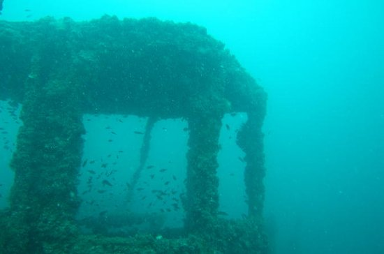 Dive Trip to King Cruiser wreck from...