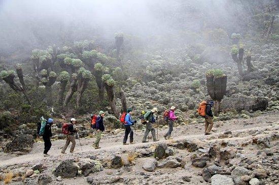 7-dages Mount Kilimanjaro Trek Via...