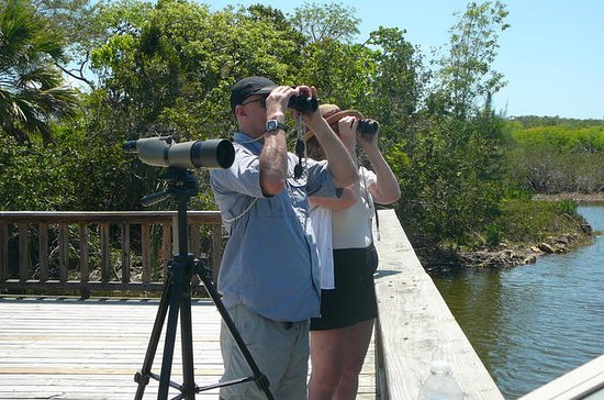 Half-Day Bird Watching Tour