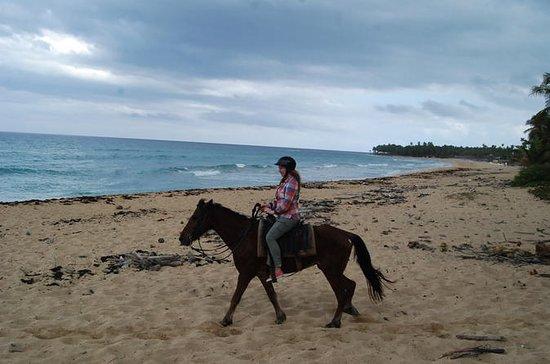 Punta Cana Horseback Riding on the