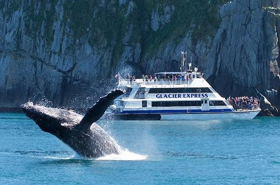 Full-Day Kenai Fjords National Park ...