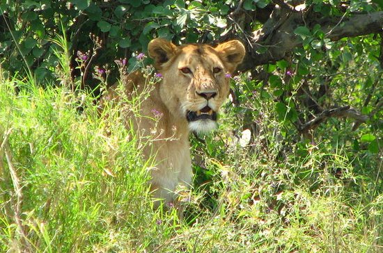 6-Day Safari in Tanzania's Northern