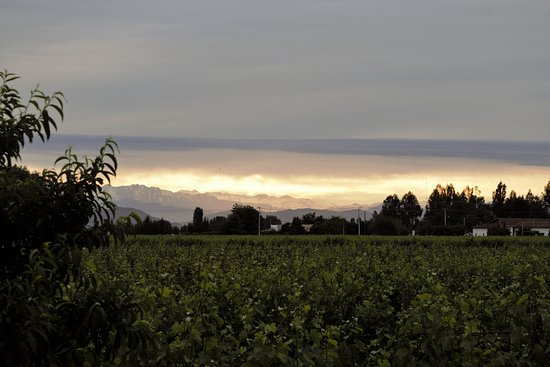 Hotel TerraVina: Sunrise from our patio across the vines and the snow-capped Andes