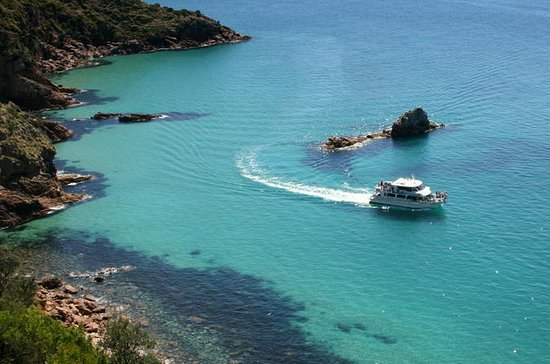 Cape Woolamai Sightseeing Cruise from...