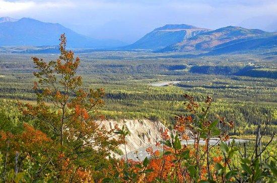 Denali National Park Walking Tour