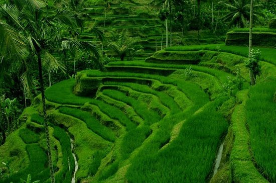 5-Day Bali Tour Including Day Trips...