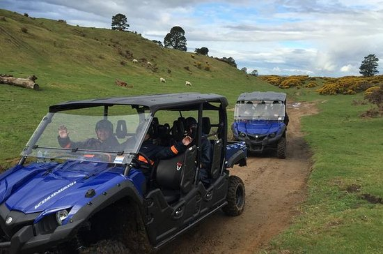 Off-Road 4WD Buggy Adventure from...