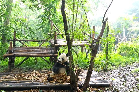 Chengdu Impressions Day Tour ...