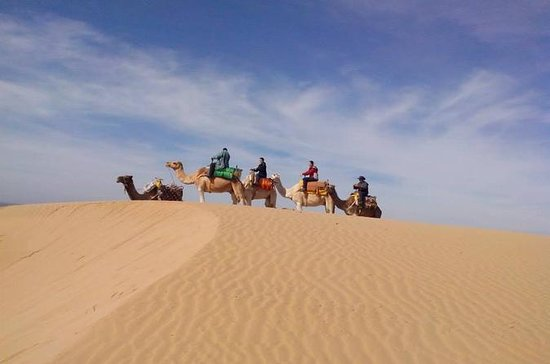 3-hour Dromedary Ride in Essaouira
