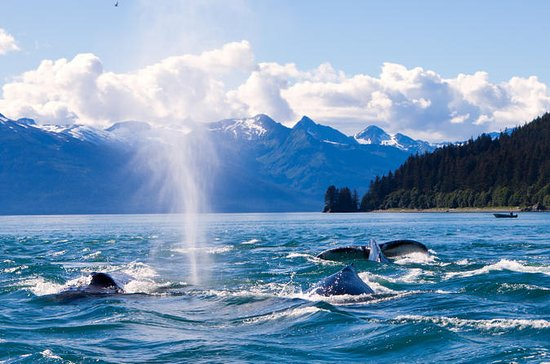 Crucero de avistamiento de ballenas...