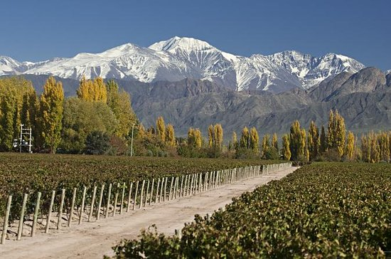 4-Day Trip to Mendoza by Air from...
