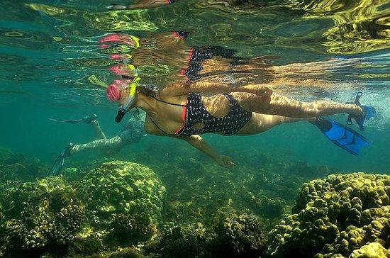 Excursión en kayak y buceo desde...