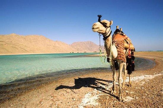 2 horas de safári de camelo até Wadi...