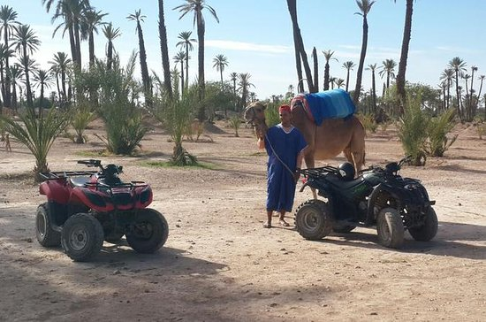 Marrakech Quad Biking and Camel...