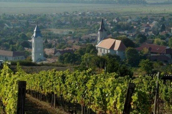 Recorrido de cata de vinos por Tokaj...