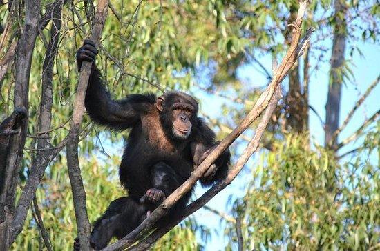 Chimpanzee Eden and Botanical Gardens...
