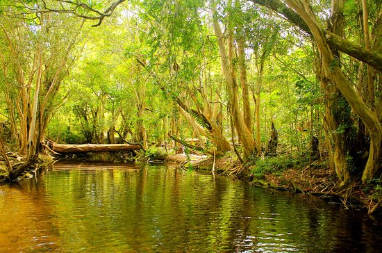 Private Half Day Tour: Exclusive World Heritage Rainforest and...