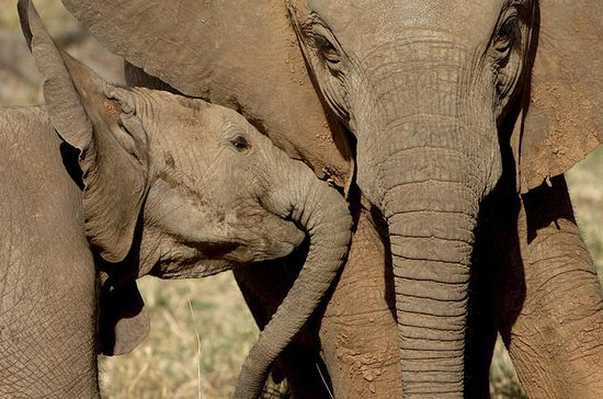 Addo Elephant National Park: Private...